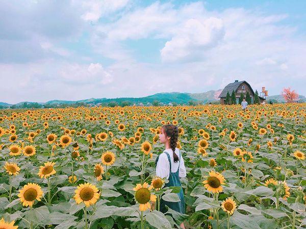 Mơ thấy hoa hướng dương là điềm báo gì?