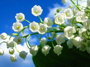 Ý nghĩa mơ thấy hoa màu trắng là điềm báo điều gì?