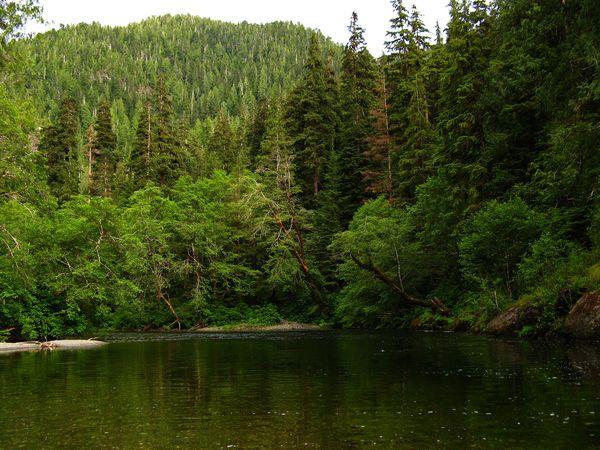 Giải mã ý nghĩa giấc mơ thấy rừng cây là gì?