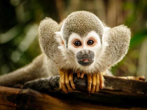 Mơ thấy khỉ đánh con gì may mắn?