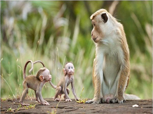 Nằm mơ thấy khỉ dự báo điềm gì?
