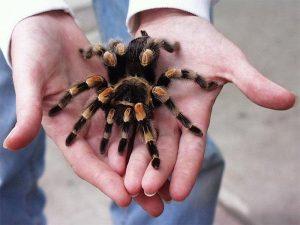 Giải mã giấc mơ thấy nhện