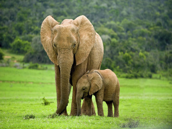 Ngủ mơ thấy con voi đánh số mấy?