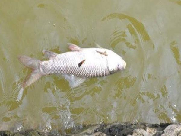 Mơ thấy cá chết là điềm gì?