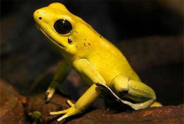 Nằm mơ thấy con ếch là điềm báo gì? Đánh con số nào