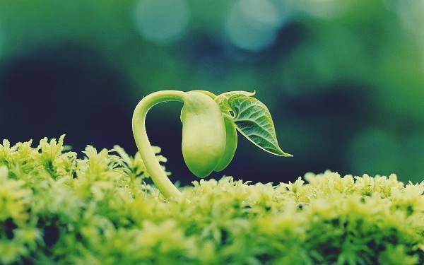Giải mã giấc mơ thấy hạt đậu xanh là điềm báo gì